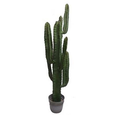 Cactus artificial Cereus