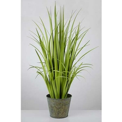 Planta decorativa junco