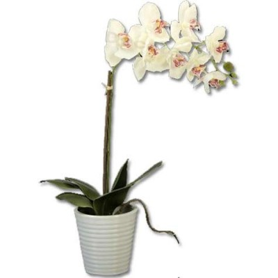 Maceta cerámica blanca orquideas latex blancas modernas