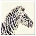 Cuadro Cebra en blanco y negro con marco en negro